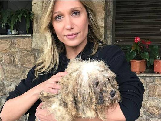 ONG de Luisa Mell resgata 135 cachorros em estado impressionante
