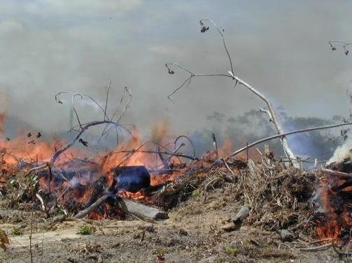 Fumaça das queimadas da Amazônia pode causar câncer, aponta estudo