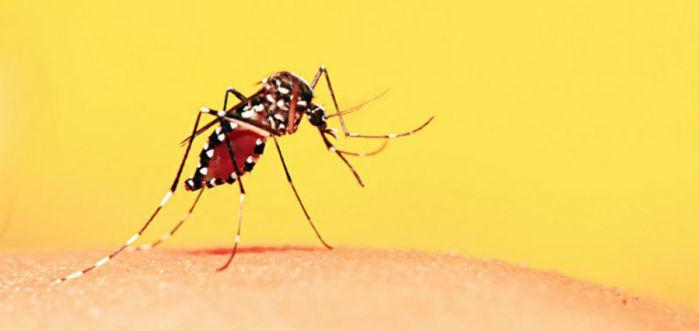 57 municípios do estado seguem em área de risco para o vírus (Crédito: Reprodução )