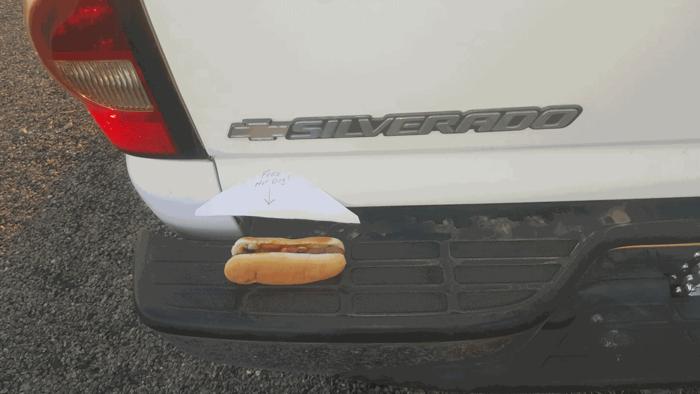 'Cachorro-quente grátis' no para-choques livra motorista de multa