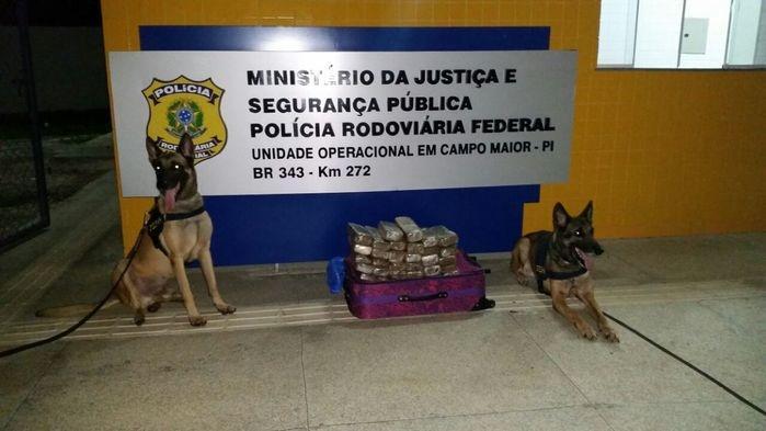 Maconha apreendida em Campo Maior