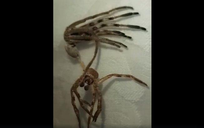 Aranha 'alienígena' (Crédito: Facebook Sandra Adaway  )