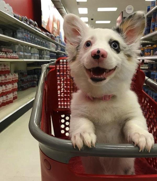 Foto de cãozinho feliz durante as compras encanta internautas