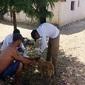 Município faz coleta de sangue em cães suspeitos de Calazar
