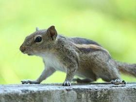 Cadeirante é expulsa de voo por levar esquilo escondido em bolsa