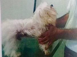 Milionário espanca cão ao se 'vingar' de ex-mulher; imagem choca!