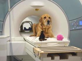 Cães se esforçam para entender e agradar os donos, diz estudo