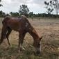 Égua que agonizou em rua morre dois dias depois de ser adotada