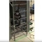 Robô-cobra japonesa é capaz de escalar e subir escadas; vídeo