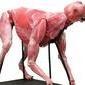 Brasil passa a fabricar cadáveres sintéticos para treinamentos
