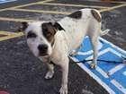 PMs adotam cadela após dono ser preso na Zona Sul do Rio