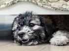 Por que cachorros vivem se escondendo debaixo de camas?