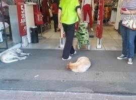 Com ar-condicionado, loja deixa cães de rua fugirem do calor