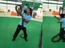 Encantador de cobras é picado por espécie venenosa durante show
