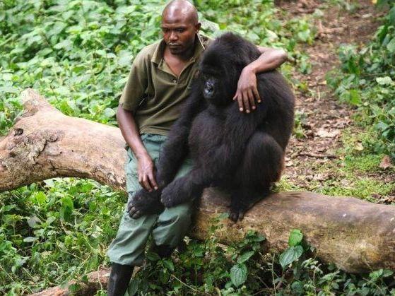 Foto de homem abraçando gorila esconde história de partir o coração