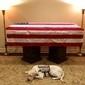 Cachorro deita ao lado do caixão de George H.W. Bush