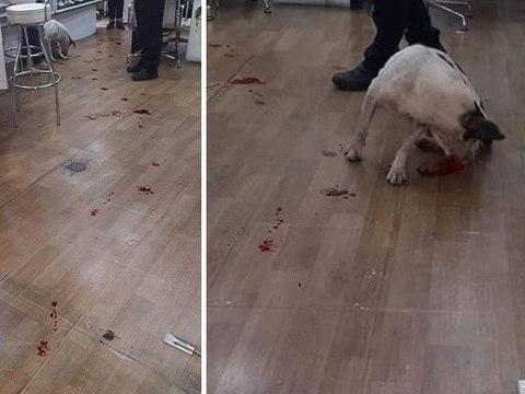 Agressor de cachorro em supermercado não será preso