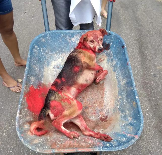 Cadela é agredida com marretadas e agressor joga tinta vermelha