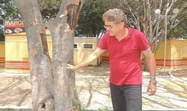 Município realizará retirada de árvores mortas da Praça Lúcio Gomes