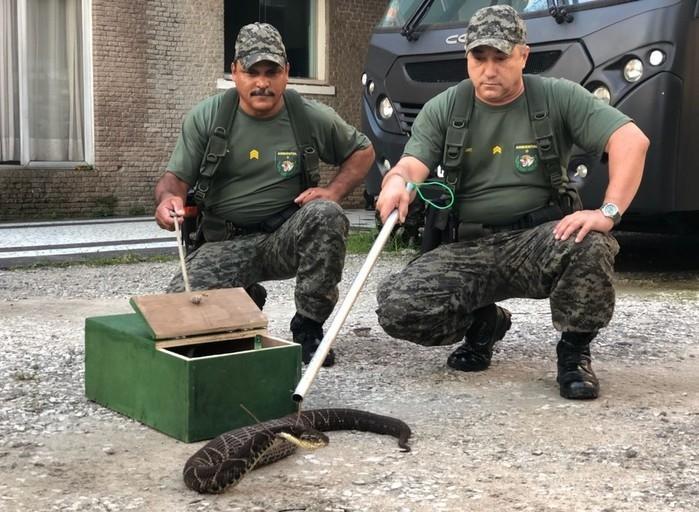 Cobra foi capturada por guardas em São Vicente, SP  (Crédito: Divulgação/Guarda Municipal de São Vicente)