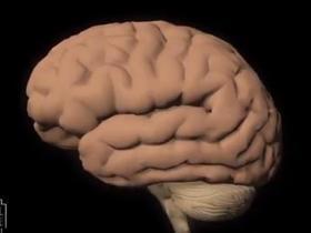 Canal Saúde: Alzheimer: saiba como diagnosticar e tratar a doença
