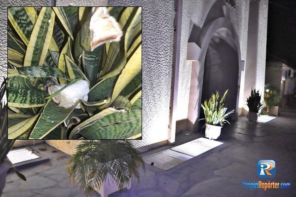 Preservativos usados são vistos jogados em uma das plantas. (Crédito: Piripiri Repórter)