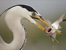 Saiba o por que as aves não têm dentes no bico