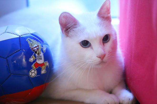 Gato Vidente  (Crédito: VCG PHOTO / Reprodução)