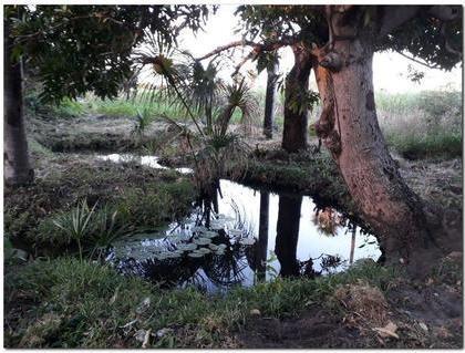 Projeto revitalização dos rios