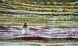 Noiva usa vestido com calda de quase 5 km de extensão