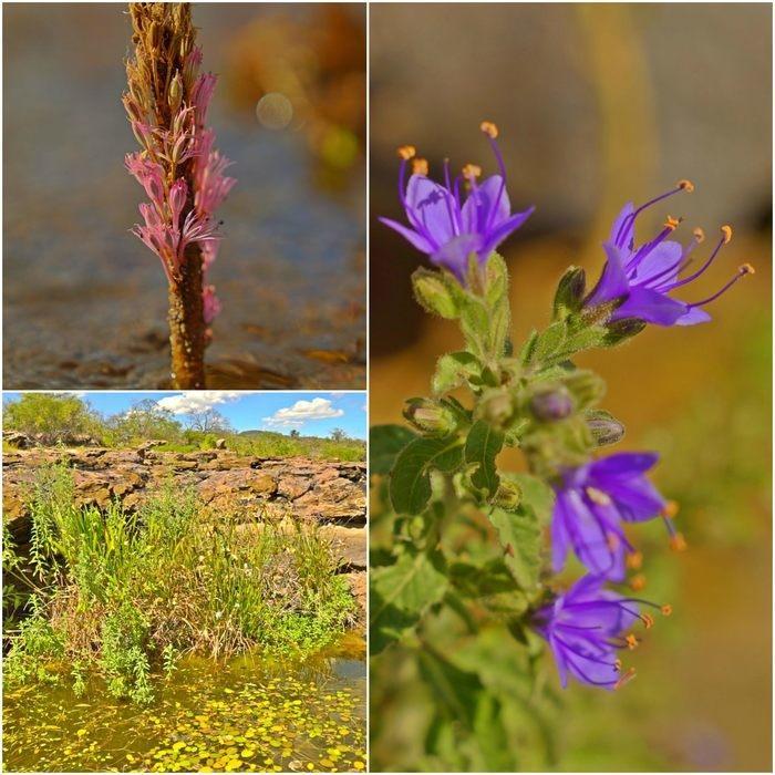 Flora do Canyon: surpreendente (Crédito: @alcidefilho)