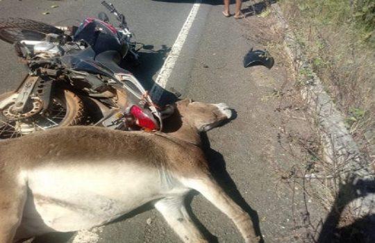 Animal provoca grave acidente na PI-113, em José de Freitas (Crédito: Reprodução/Realidade em Foco)