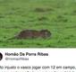 Rato em campo no jogo entre Vasco e Bahia rende memes na web; veja