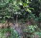 Cobra venenosa se camufla nas folhas; consegue identificá-la?