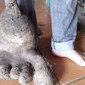 Casal descobre batata mutante no formato de pé humano com 8 Kg