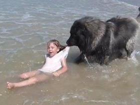 Cão confunde brincadeira com afogamento e 'salva' menina em praia