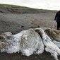 Animal 'sem cabeça e olhos' é encontrado e aterroriza moradores