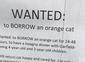 Mulher pede gato emprestado para participar de um jantar e viraliza