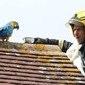 """Papagaio """"boca suja"""" é resgatado após fuga e agrecede bombeiros"""