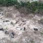 Mais de 50 pinguins são achados mortos em praia de São Paulo
