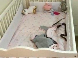 Cobra invade berço de bebê e mãe entra em pânico: 'Muito medo'