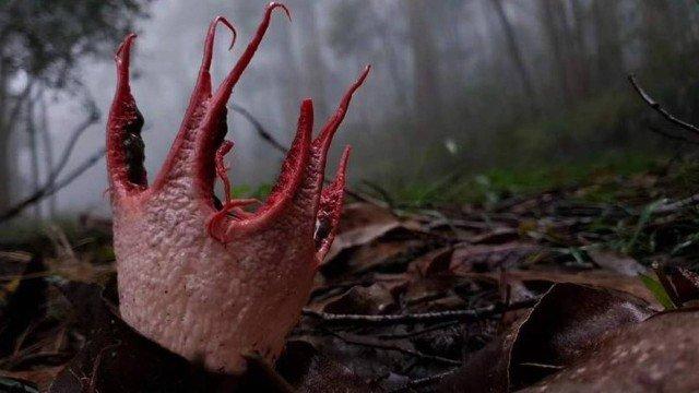 Fungo 'alienígena' é visto em floresta e vira atração na China
