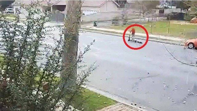 Mulher é indiciada por crueldade após arrastar cão com motoneta; vídeo