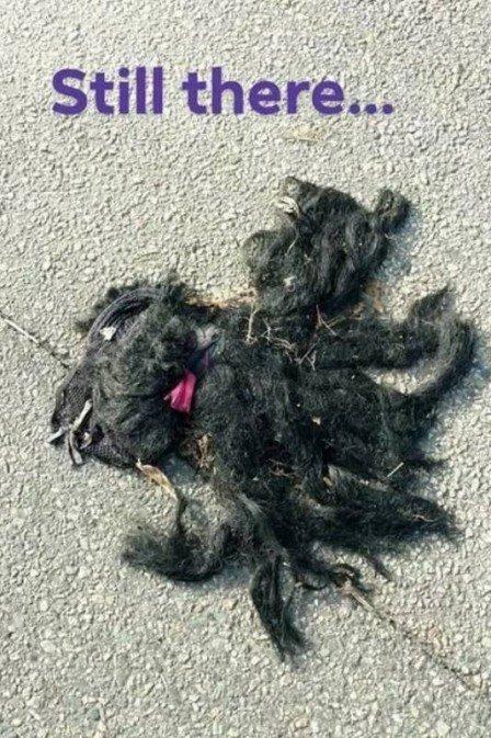 Mulher denuncia corpo de cão abandonado em rodovia e gera confusão