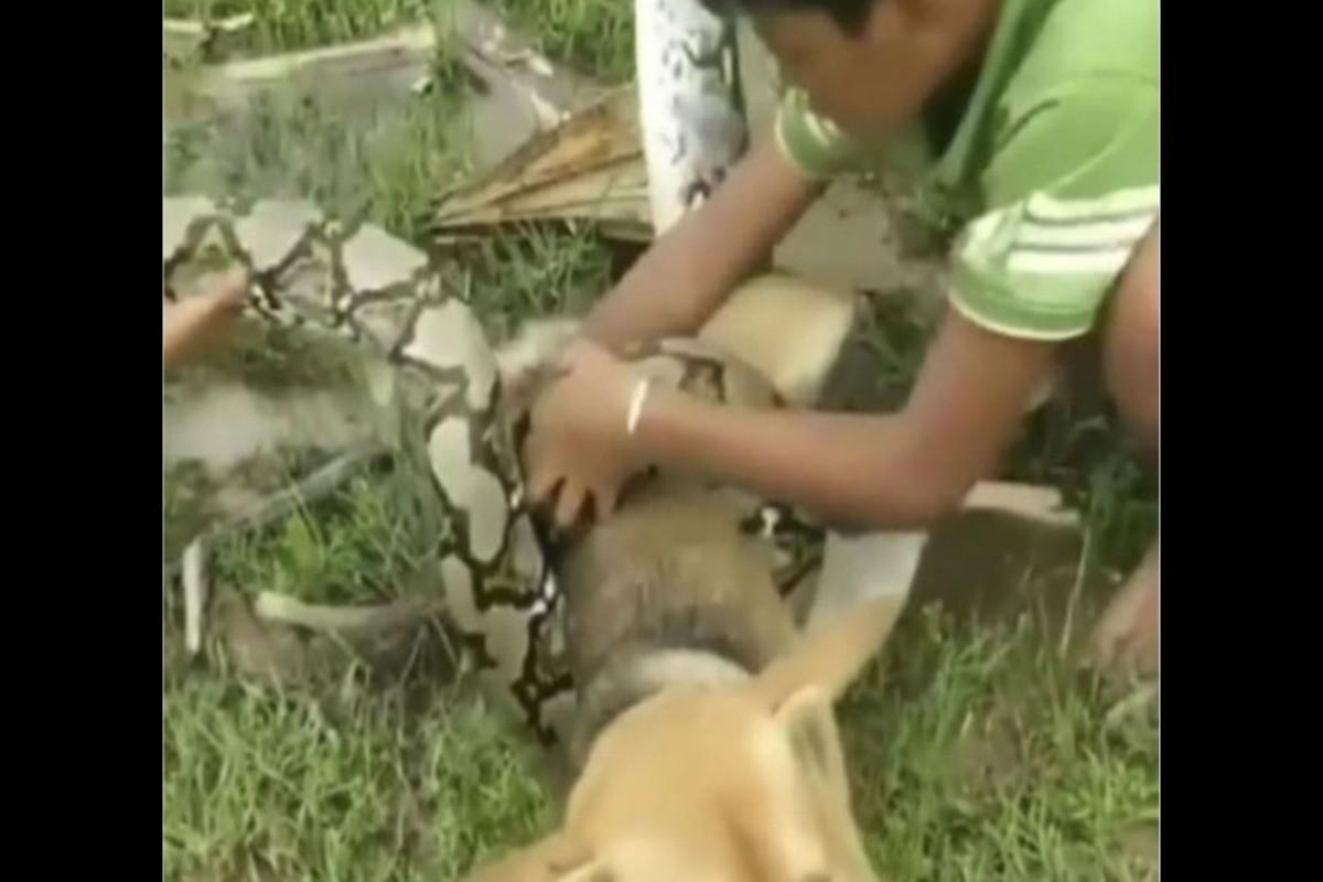 Crianças brigam com cobra que estava matando seu cachorro