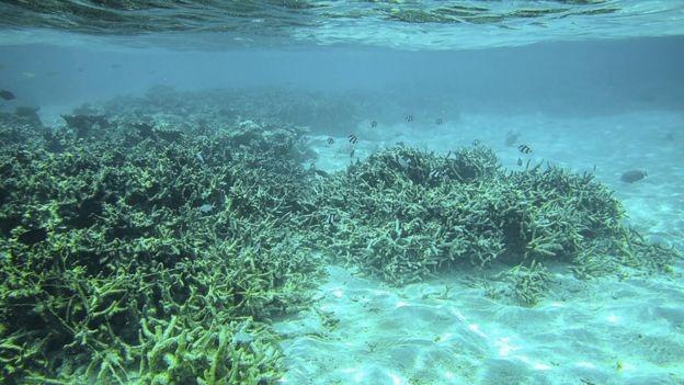 Corais mortos