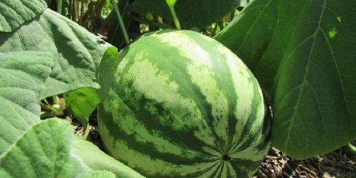 Prefeitura investe em agro-floresta e já colhe frutos