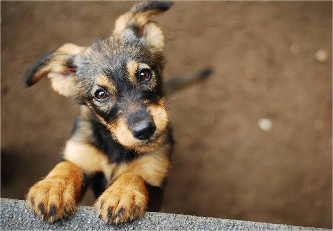 O que você precisa saber sobre parasitas nos pets - Imagem 1