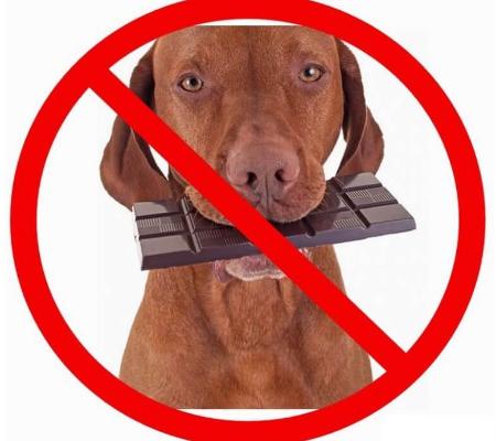 Confira 15 alimentos que são proibidos para cachorros