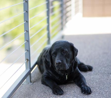 Confira as 17 melhores raças de cães para se criar em apartamento